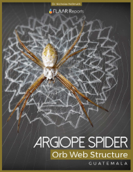Argiope Spider orb web structure sofias parents Nicholas Hellmuth FLAAR Reports cover news