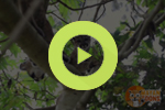 cover two cubs on a tree dr nicholas hellmuth video flaar
