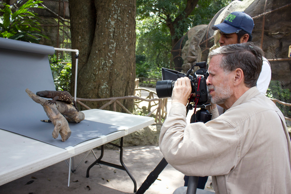 Dr. Hellmuth taking photographs of a Heloderma in the La Aurora National Zoo. Photo by Sofia Monzon, September 2011