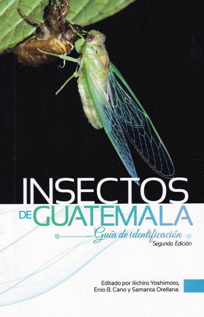 Insects-from-Guatemala-Second-Edition-Jiichiro-Yoshimoto-April-2018-Cicadidae-en-la-Reserva-Refugio-del-Quetzal-Suchitepequez