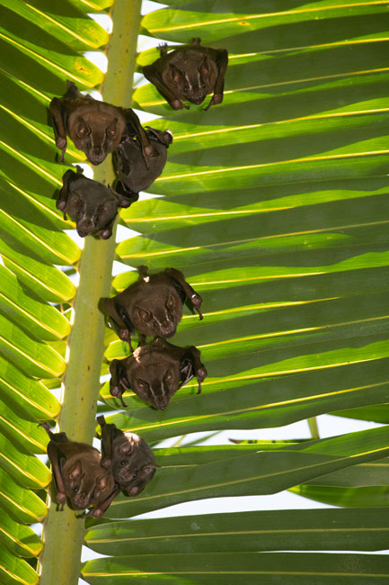 bats-of-tapon-creek-nature-reserve
