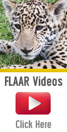 List of all the FLAAR Videos of mayan iconographic animals in Guatemala